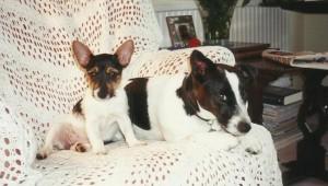 Jane B Dogs