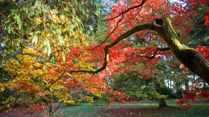 Enjoy a riot of colour this autumn