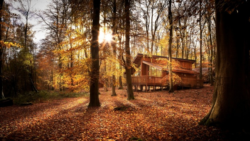 Win a luxury UK stay in the forest