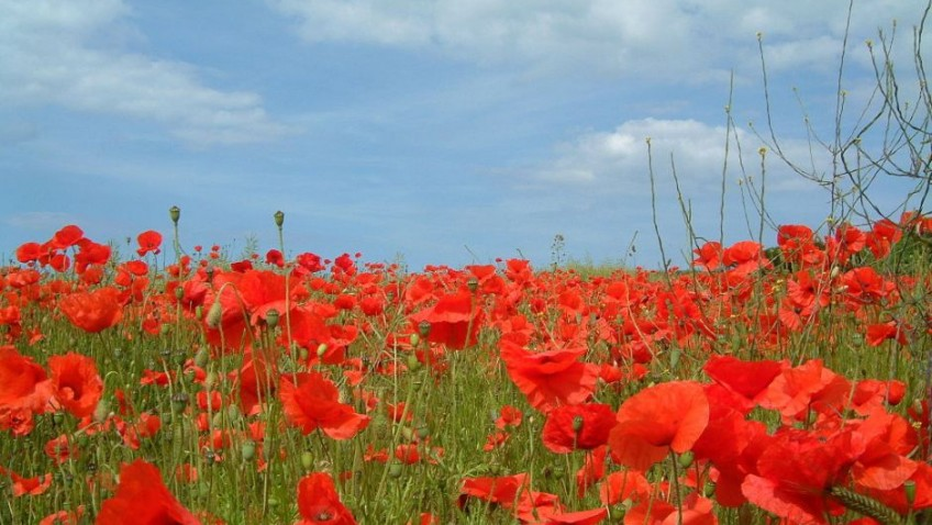 The significance of Remembrance Day
