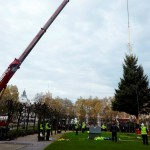 Houses of Parliament welcomes England's most famous Christmas tree
