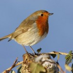 World's biggest garden wildlife survey on its way…