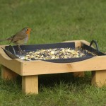 RSPB Big Garden Birdwatch results: Fewer finches visiting our gardens