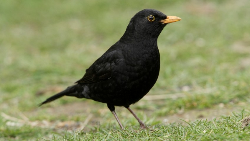 Why feed your garden birds Mature Times