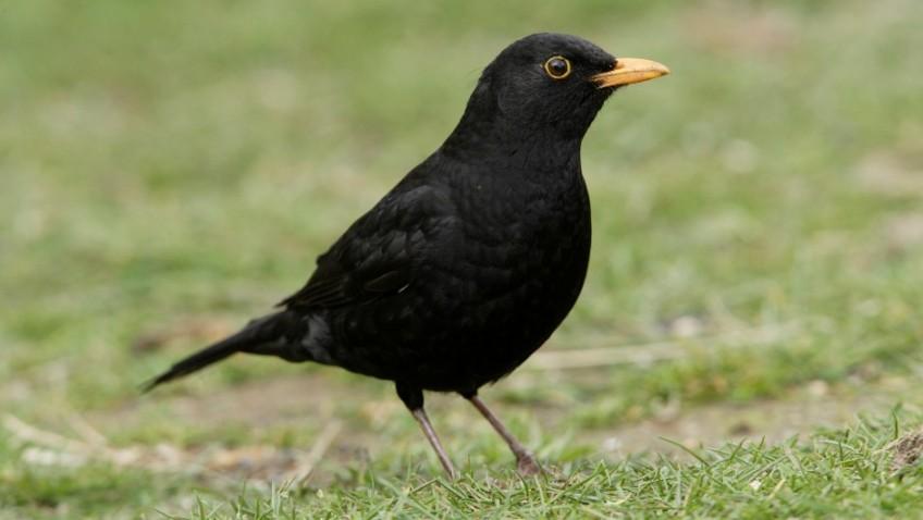 Why feed your garden birds?