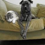 Pet owners warned of flea risk