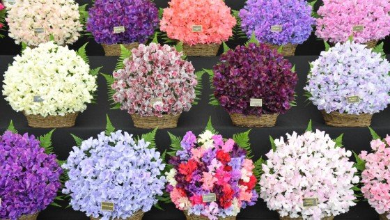National Flower Show springs into bloom at Hylands House