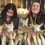 Ewe beauty – a record number of lambs born