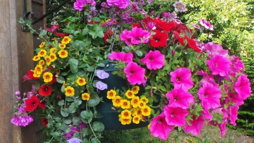 August in the Garden – top tips from Perfect Plants