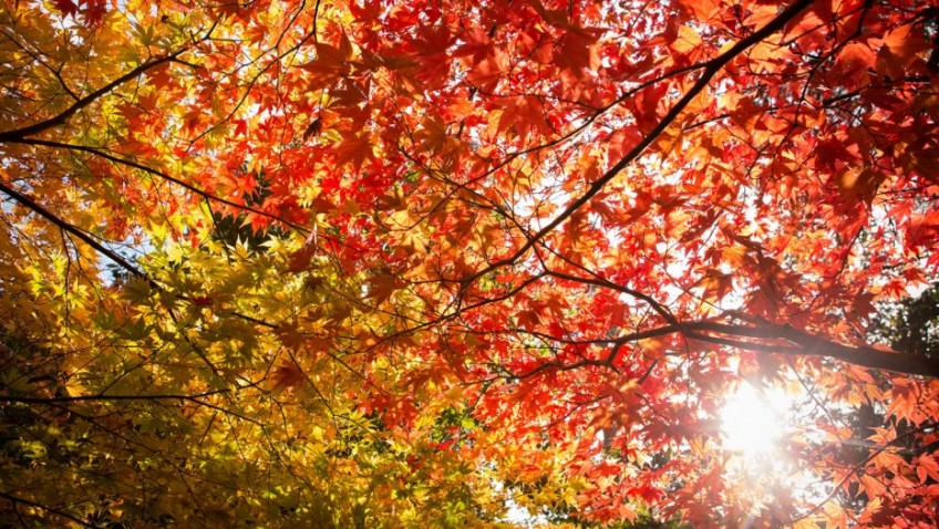 Experience autumn