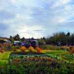 National Allotments Week – August 2015