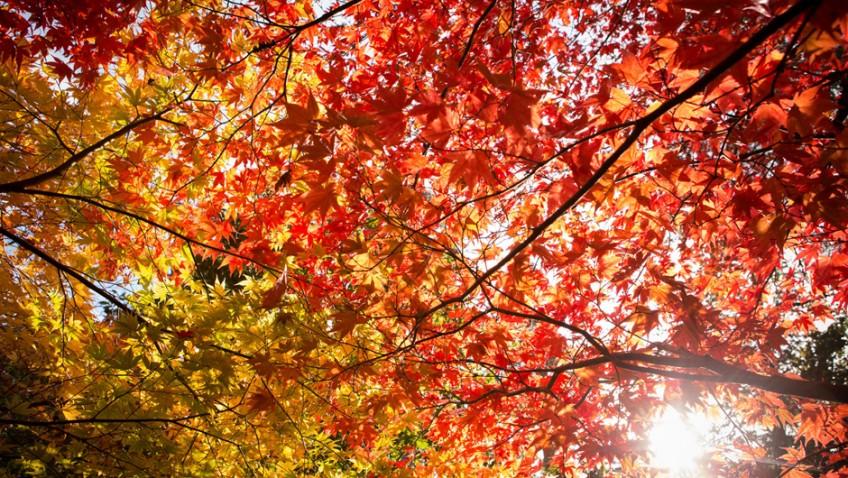 The ten best ways to enjoy autumn at Westonbirt