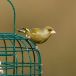 Why are my bird feeders still full?