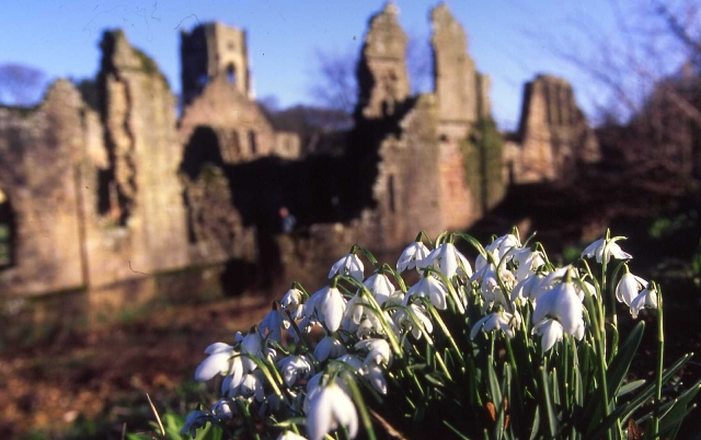 Fountains Abbey with snowdrops