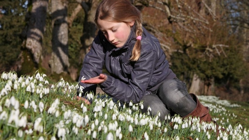 Roll out the white carpet, it's snowdrop time