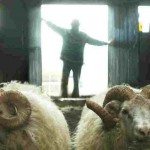 Rams – a poignant and humorous tale of brotherly love Icelandic style
