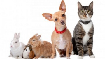 Is your pet insured?