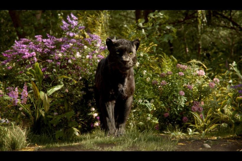 Black Panther in Jungle Book