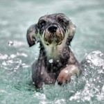 Doggy paddle heals pooches with mobility problems