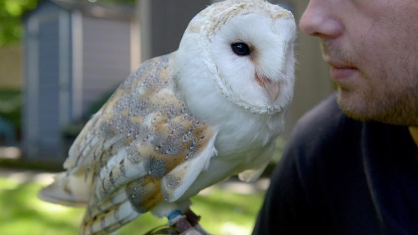 Hoo-hoozat! It's Shadow the barn owl!