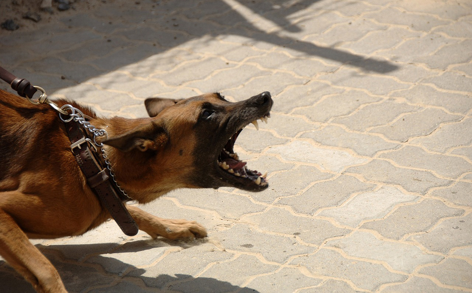 Dangerous dog - Free for commercial use No attribution required - Credit Pixabay