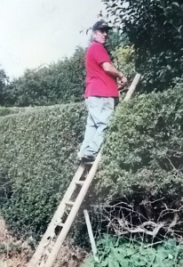 old man up ladder on hedge