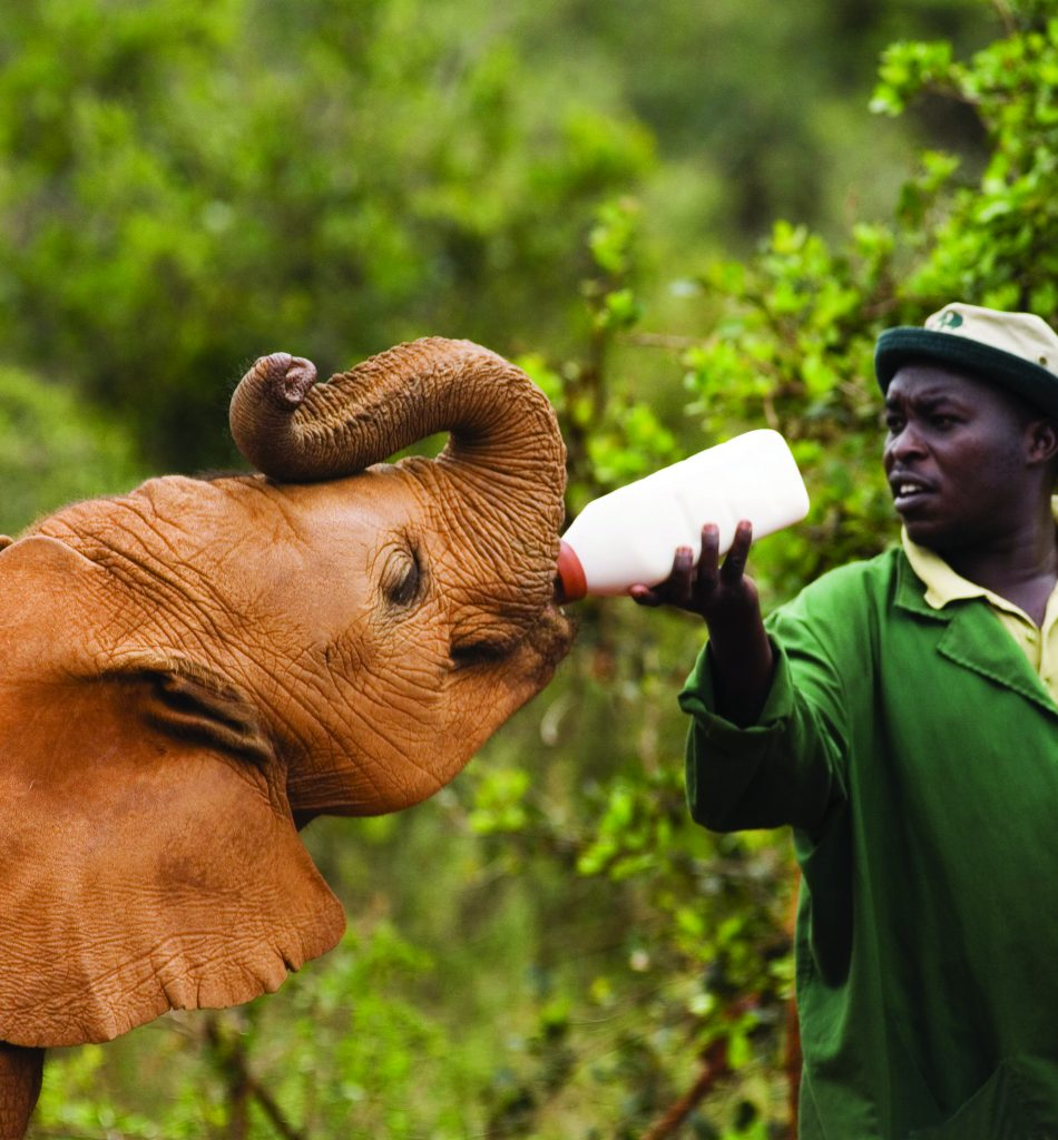 Orphan baby African elephant being fed milk - Credit World Pictures/Photoshot