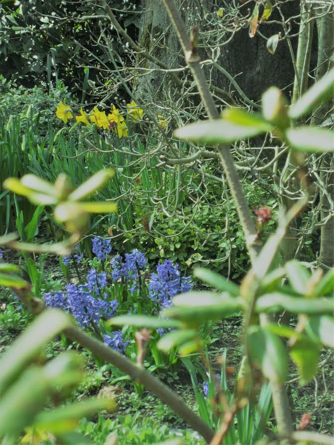 Bulbs in a woodland garden – a perfect pairing. Gardening
