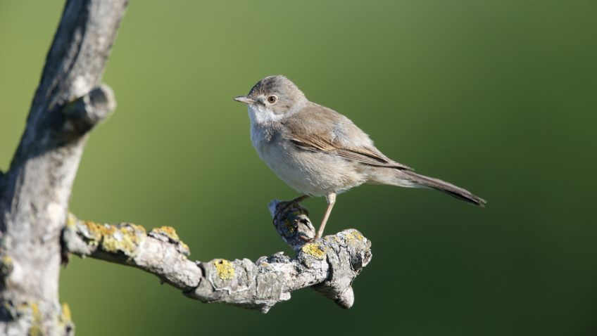 Celebrating the return of our spring migrant birds
