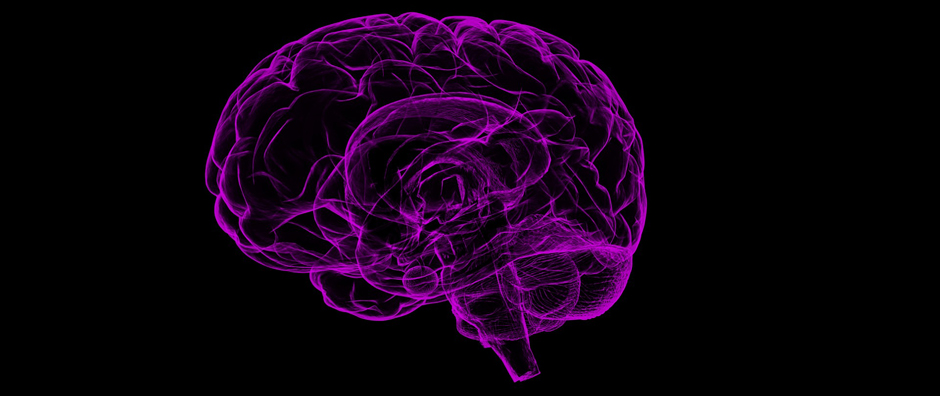 Brain - Free for commercial use No attribution required - Credit Pixabay