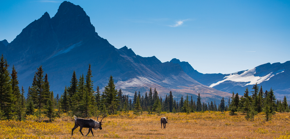 Jasper National Park - Credit Parks Canada - Ryan Bray