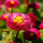Senior moment – Spring blossoms