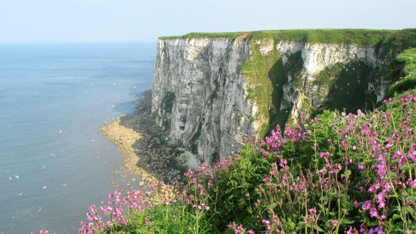 Visitors rate RSPB Bempton Cliffs one of the UK's Top Ten natural attractions