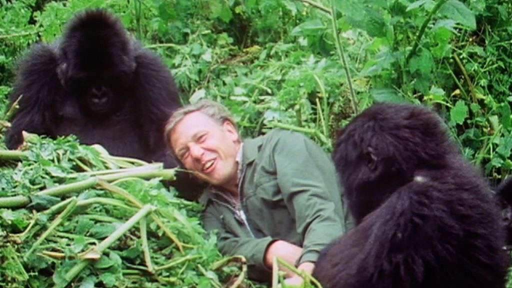 Sir David Attenborough with Gorillas