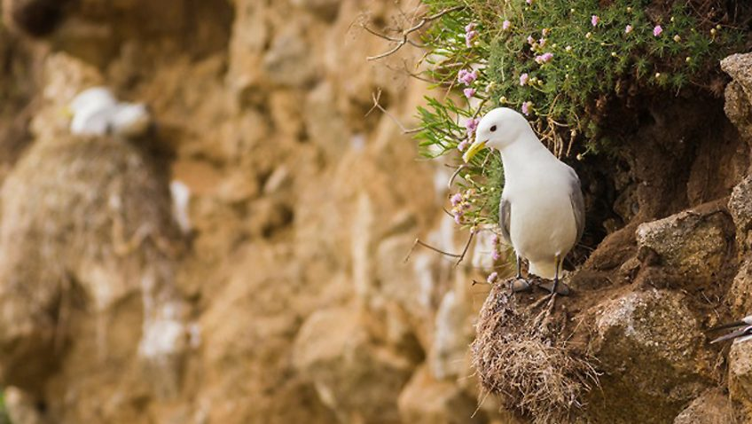 Mystery of birds' movements at sea solved by project headed by the RSPB