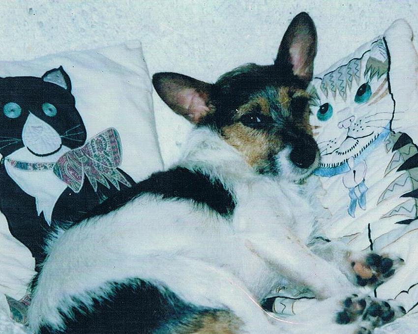 Juba the dog