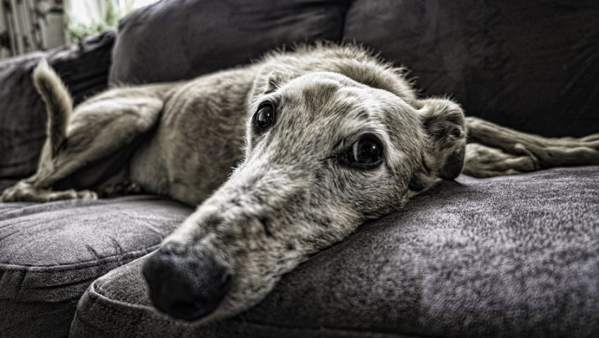 Could you rehome an elderly animal?