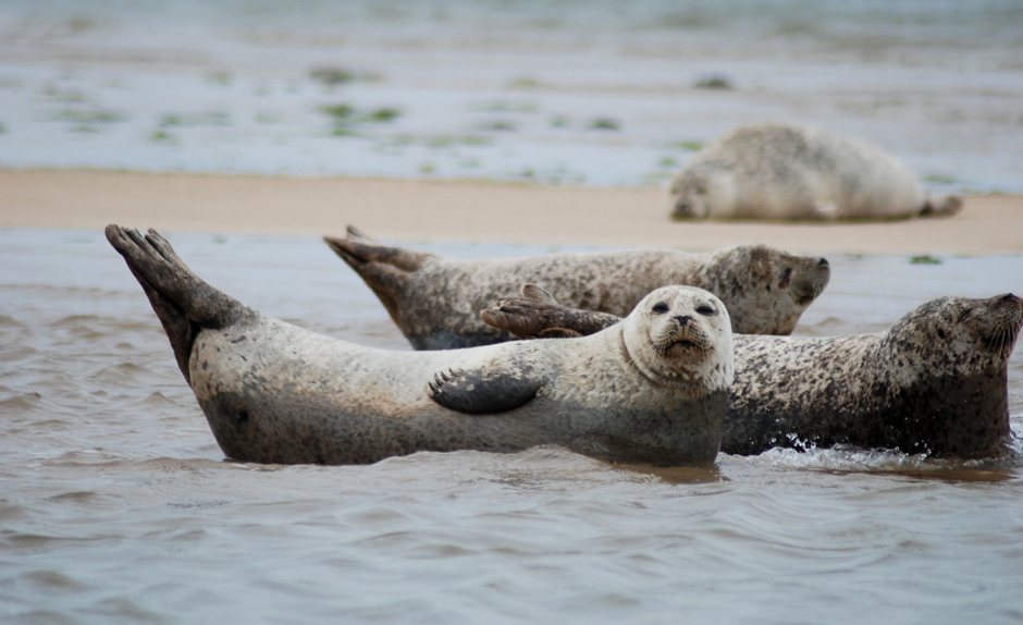 Norfolk Broads - Seals