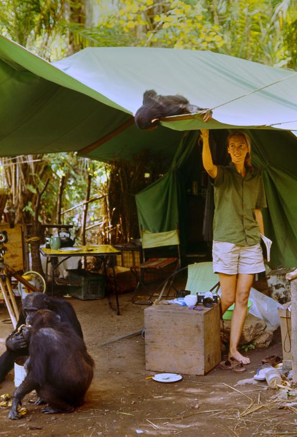 Jane Goodall in Jane - Copyright National Geographic Creative - Credit Hugo van Lawick