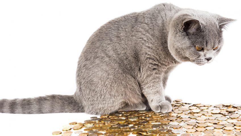 Senior Moment – Fat Cat Day
