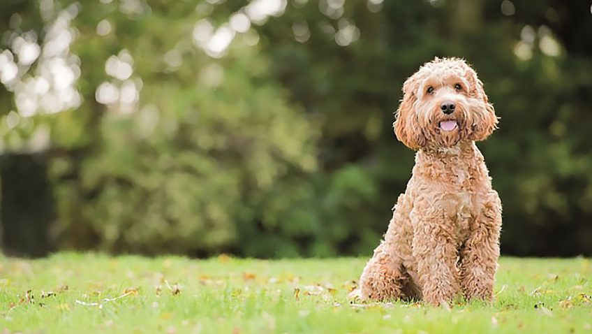 Great British Dog Walks to get tails wagging and faces smiling in 2018
