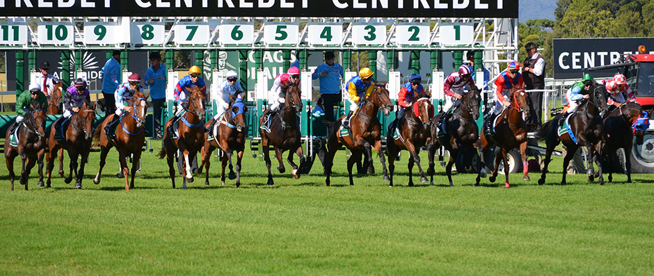 Horse Racing - Free for commercial use No attribution required - Credit Pixabay