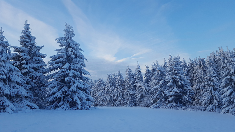 Weather - Snow on trees - Free for commercial use No attribution required - Credit Pixabay