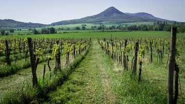 Paula's Wines of the Week starting 13th August 2018