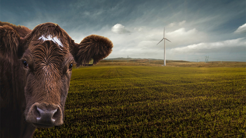 Cow windmill - Free for commercial use No attribution required - Credit Pixabay