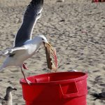 Senior Moment – Seagulls