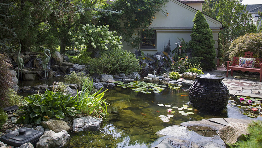 Garden ponds: how to maintain them