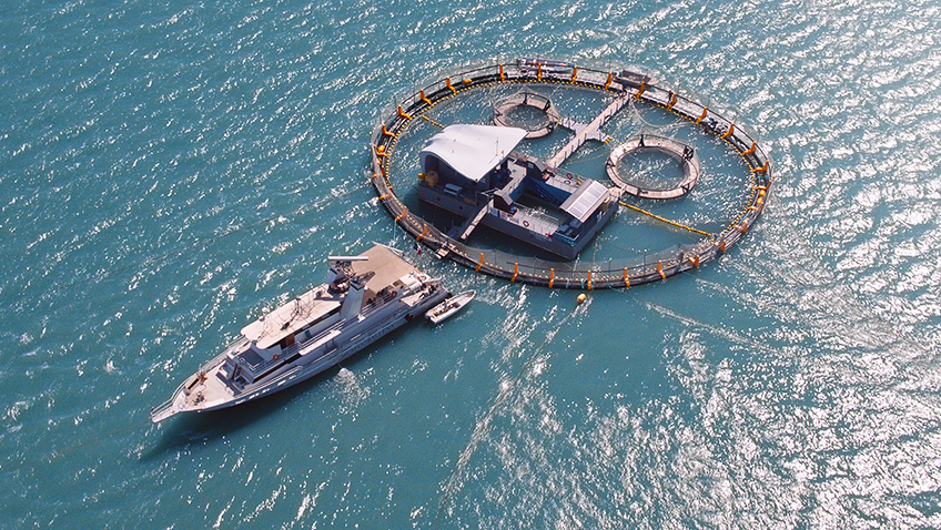 Vaquita CPR rescue base in Sea of Shadows - Credit National Geographic