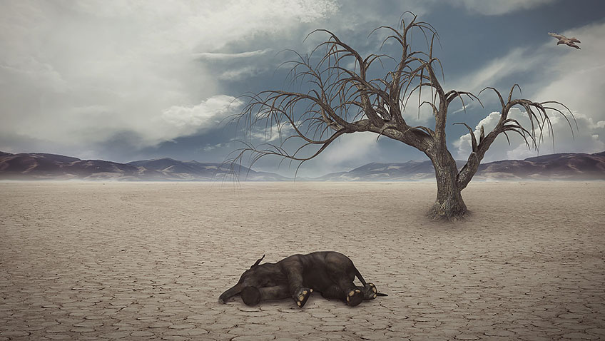 Drought - Extinction - Elephant - Free for commercial use No attribution required - Credit Pixabay