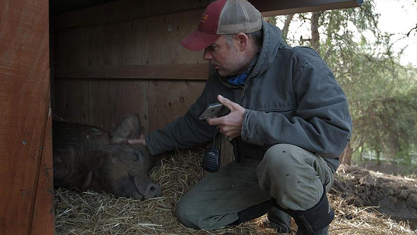 John Chester in The Biggest Little Farm - Credit IMDB